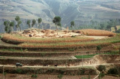 Chinese farmers toss grain into the air to separate kernels from chaff on the top of a hillock in Pianguan county on the Loess Plateau in Shanxi Province. Soil erosion in Shanxi is the most serious in all of China. By the turn of this century, the natural vegetation cover on the Loess Plateau had decreased to 10 percent. After decades of piecemeal attempts at tree-planting, the Chinese government is moving to tackle deforestation systematically with the help of multilateral agencies. Farmers now borrow soft loans from the World Bank to terrace inclines of less than 20 degrees for planting cereal grains while steeper slopes are planted with reinforcing shrubs and trees. (Picture: Reuters)