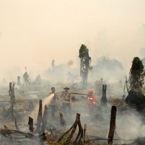 Is Indonesia's fight against forest fires falling short?