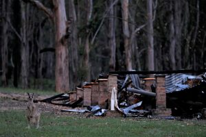 A kangaroo stands in front of the remains of a burnt down house, destroyed during the bushfire season, in the community of Wytaliba, New South Wales, Australia, 29 January 2020 (Photo: Reuters/Jorge Silva).